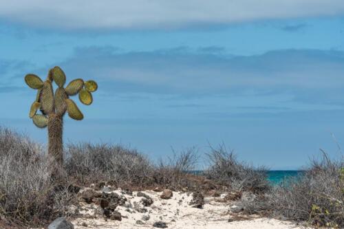 SundbybergsFK Backman Lars Strand på Galapagos