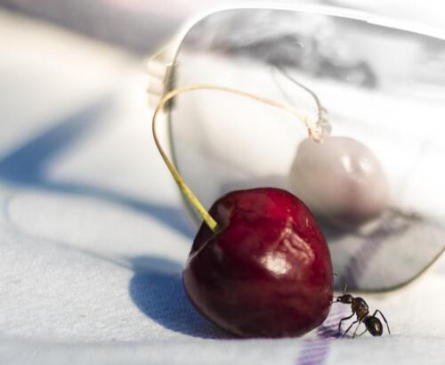 SundbybergsFK Wiklund Marcus cherryant-2